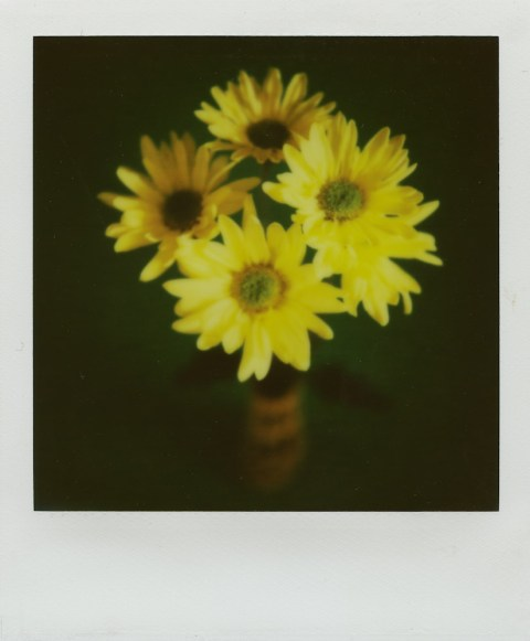 Polaroid SX-70 - Impossible Project PX-70 V4B