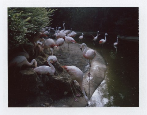 Photo: Amanda Fleetwood - Polaroid 420 Land Camera - Fuji FP-100C