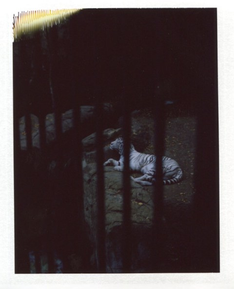 Photo: Daniel Rodrigue - Polaroid 180 Land Camera - Fuji FP-100C