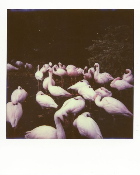 Photo: Laidric Stevenson - Impossible Project PX-680 CP - Polaroid Sun 660