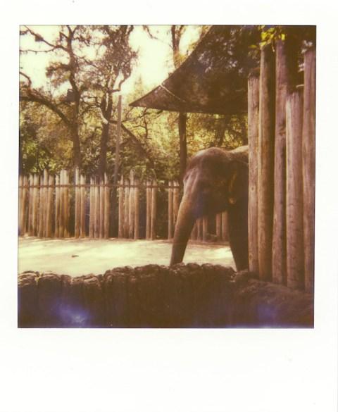 Photo: Laidric Stevenson - Impossible Project PX-680 CP - Polaroid Sun 660