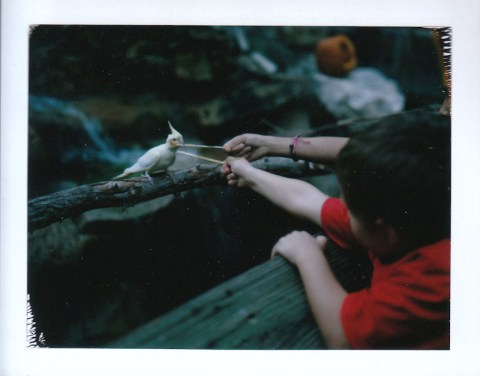 Photo: Scott Mitchell - Polaroid 180 Land Camera - Fuji FP-100C