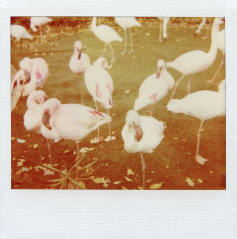 Photo: Synthia Goode - Polaroid Softtone film - Polaroid Spectra AF