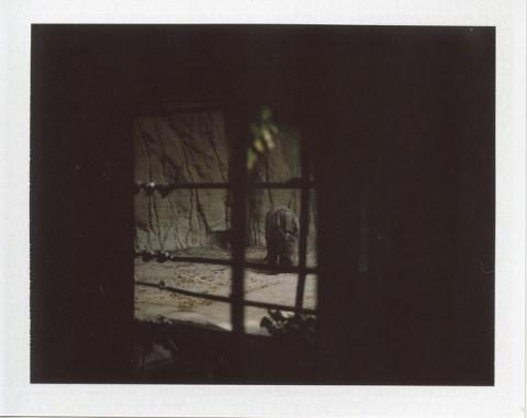 Photo: Marc Weintraub - Bronica SQ-A - FujiFilm FP-100C