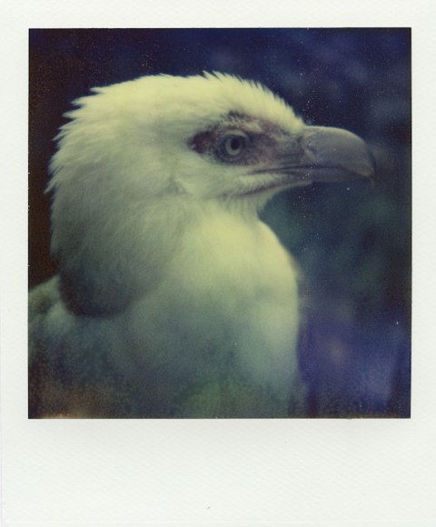 PolaWalk at the Zoo - Impossible Project PX-70 COOL - Polaroid Sonar SX-70