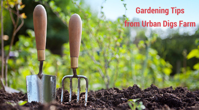 Urban Digs Farm's Ten Spring Gardening tips