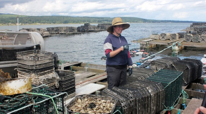 Discover Comox at the BC Shellfish Festival