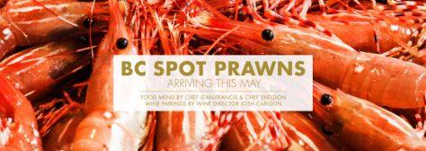 prv1718 spot prawns news 1030x364