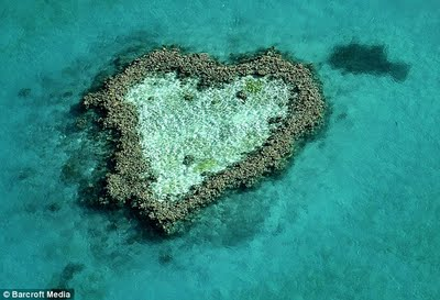 Heart-shaped coral on the Great Barrier Reef, Australia