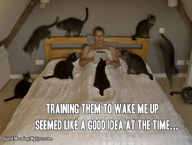 Cats Wake Up Meme