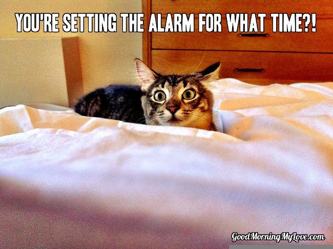 Wake up memes cat