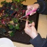 Houseplant care and propagation