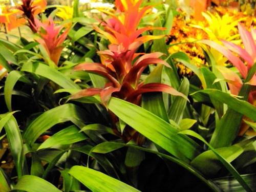 Medium Of Home Depot Plants