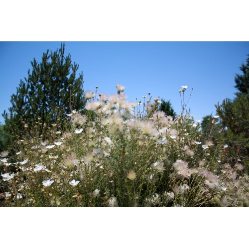 Medium Crop Of Plants Of The Southwest