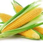кукуруза главная