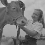 cow and girl at fair
