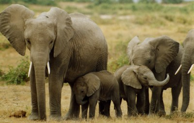 elephants_tour-uganda