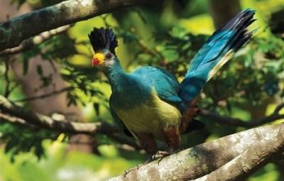 uganda-birding-safari-582x438