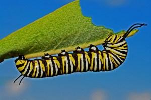 garden fairies, caterpillars, butterflies, grammieknows
