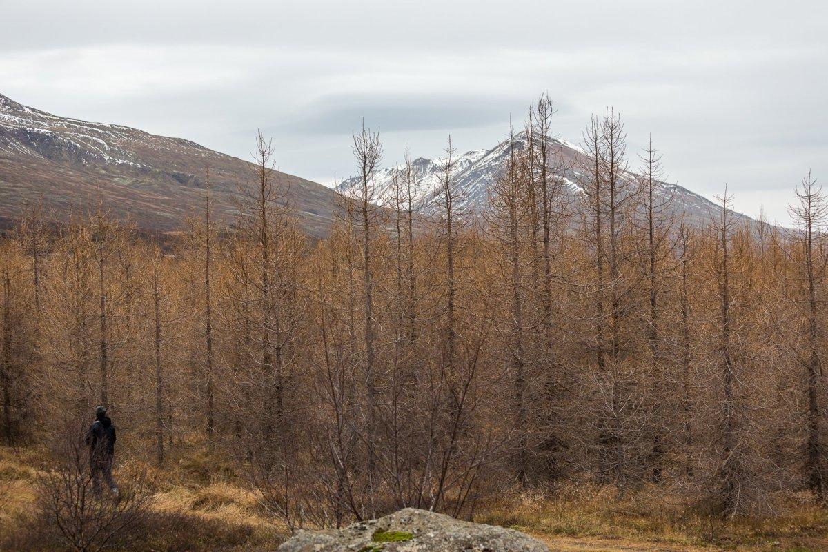 An Autumn World: Exploring The Forests Of Lagarfljót