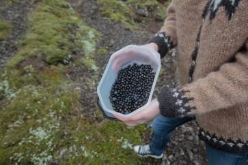 Picking Berries by Alísa Kalyanova