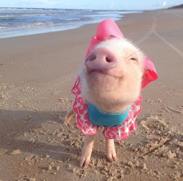 pink_beach