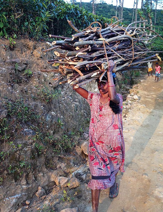 woman carrying wood at Little Adam's Peak