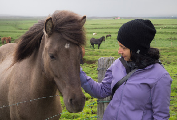 Baharak with Icelandic horse