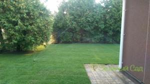 Рулонный газон Чернигов