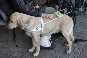 Service_Dog_in_Oslo_2013