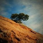 Tree in Phoenix