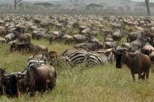Klein's Camp Serengeti Lodge Tanzania Africa