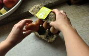 Happy Eggs sustainable egg carton