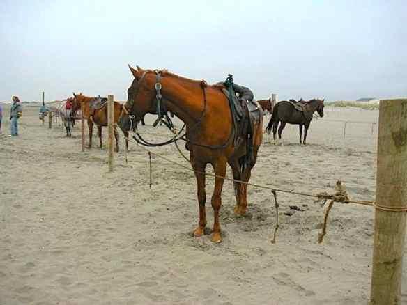 How to Choose a Responsible Horseback Riding Tour