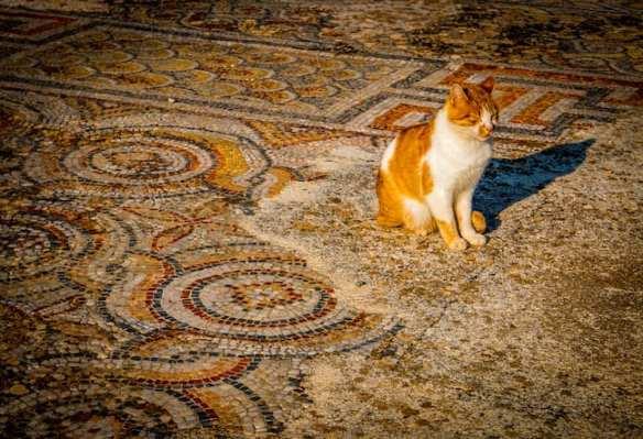Cats_of_Ephesus_Turkey