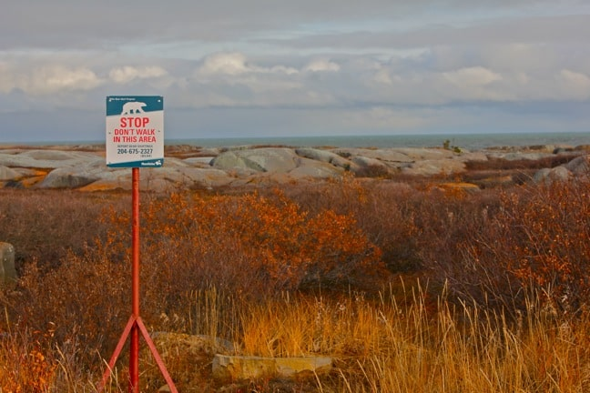 Polar Bear Alert Sign in Churchill, Manitoba
