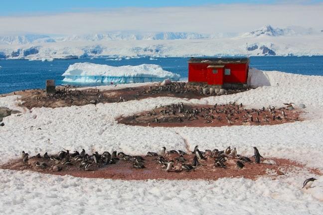 Penguin Colonies at Mikkelsen Harbour, Antarctica