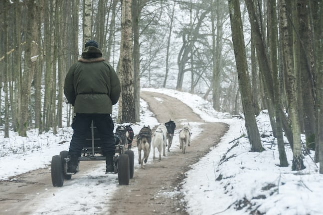 Lithuania-Dog-Sledding