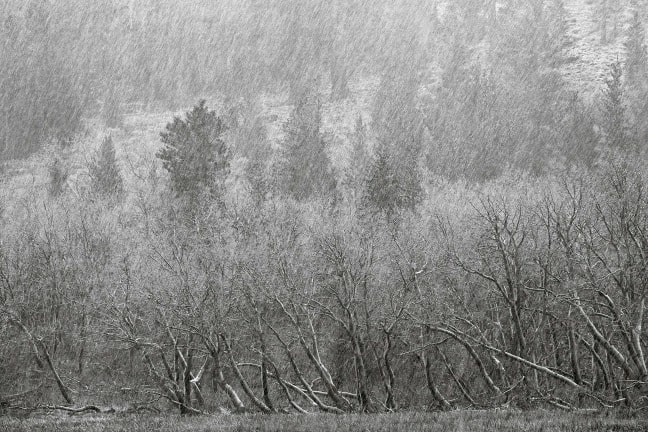 Ansel Adams Wilderness, California. Sleet near Parker Lake