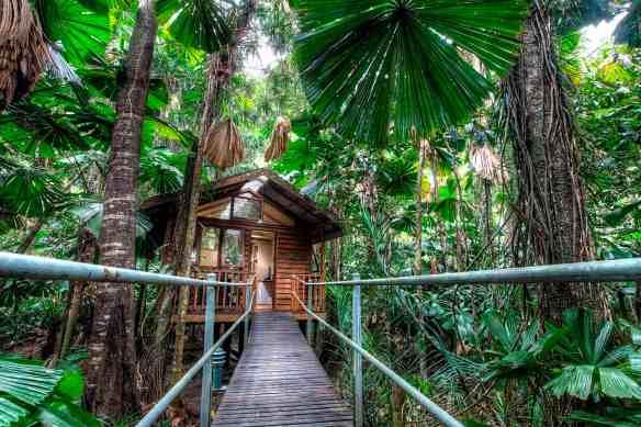 daintree wilderness eco lodge, australia