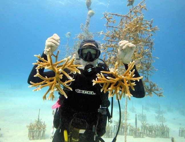 Coral Restoration Foundation Founder Ken Nedimyer
