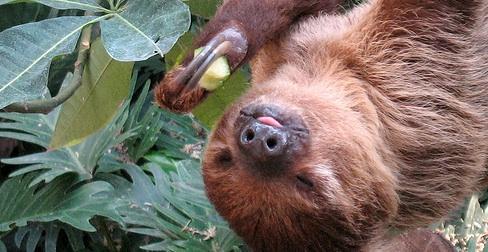 sloth-slow-food-slowfood-greenprophet.jpg
