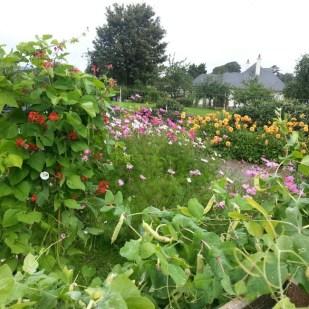 Leighlinbridge Community Garden