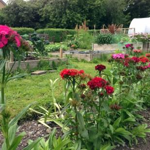 Leighlin Parish Community Garden