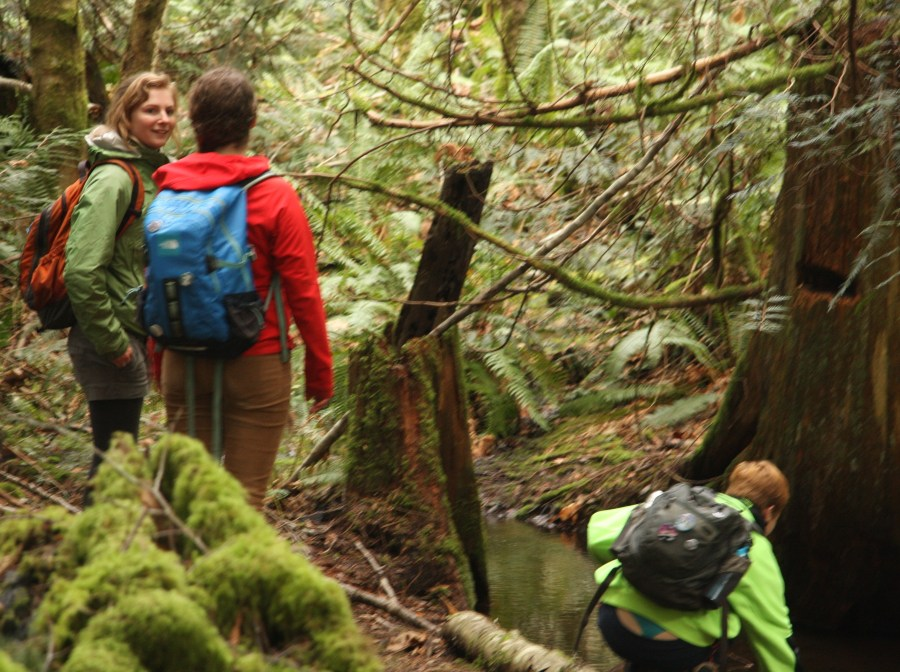 Exploring the forest to harvest plant for wreath_Vancouver Island_Kieran Dowling