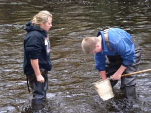 Murphy water quality assessment3