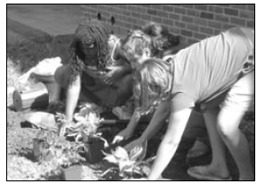 planting after school