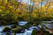 oirase_autumn