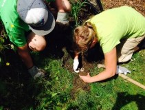 Veevers Park Clean Up 3
