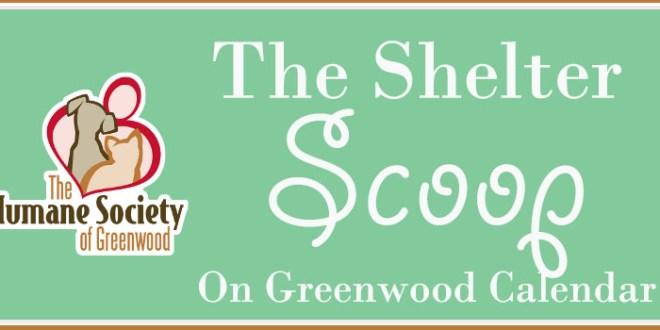 shelter scoop